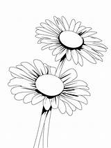 Daisy Coloring Flower Flowers Printable Recommended sketch template