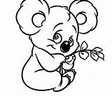Koala Drawing Coloring Pages Bear Colouring sketch template