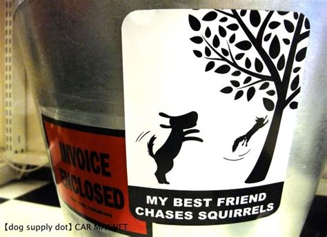 dot ocnk   friend chases squirrels