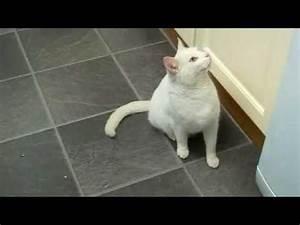 Repulsif Pour Urine Chat : ssscat r pulsif pour chat kit19005 youtube ~ Melissatoandfro.com Idées de Décoration