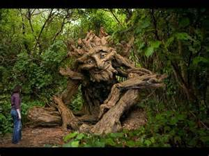 top 20 extremely strange looking trees world 39 s most and amazing trees
