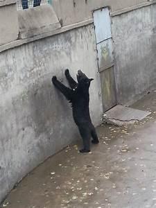 22 Heartbreaking Pictures Of Sad Captive Animals Stuck In Zoos