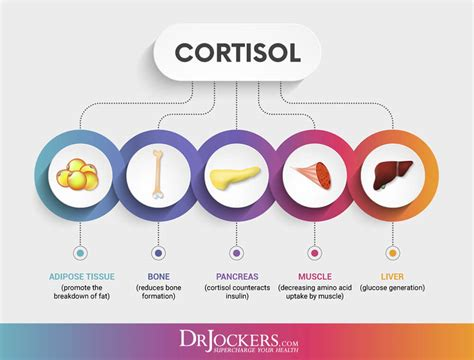 ways  balance cortisol levels drjockerscom