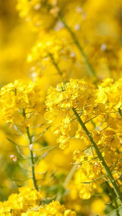 Yellow Nature Wallpapers Iphone Flowers Spring Flower