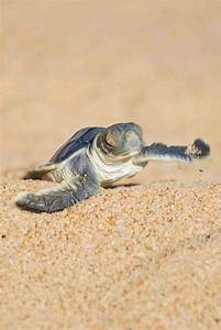 98 best images about Turtles on Pinterest | Western boots ...