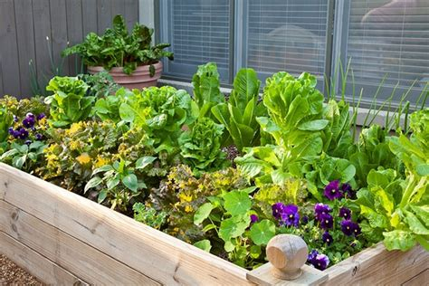 vegetable garden tips and ideas raised vegetable garden clever and creative home gardening ideas