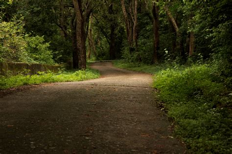 Free photo: Indian Forest Landscape - Forest, India ...