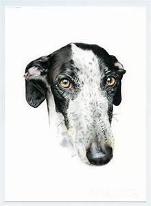 Galgo negro y blanco. Greyhound black and white ...