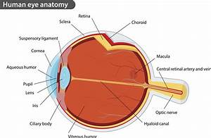 Symptoms And Treatment Of Corneal Abrasions