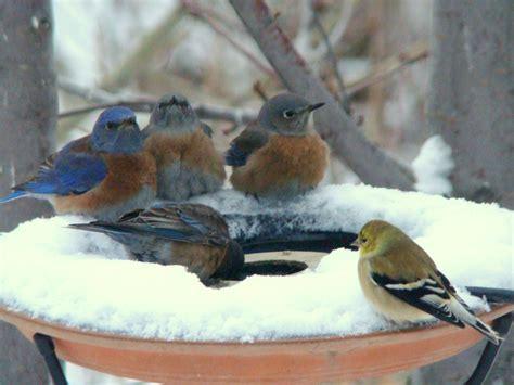winter bird bath heated seed solar ideas
