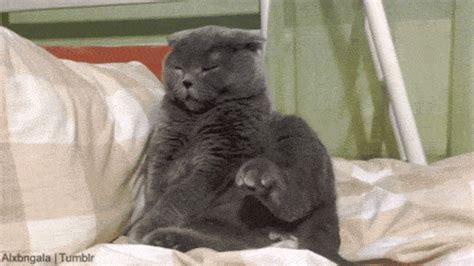 sleepy cat gif