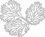 Coloring Lettuce Coriander Leaves Drawing Leaf Sheet Pages Getdrawings sketch template