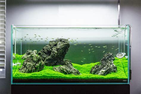 guide to aquascaping guide to planted aquarium aquascaping iwagumi glass aqua