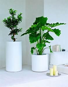 Große Zimmerpflanzen Pflegeleicht : feng shui pflanzen f r harmonie und positive energie im ~ Lizthompson.info Haus und Dekorationen