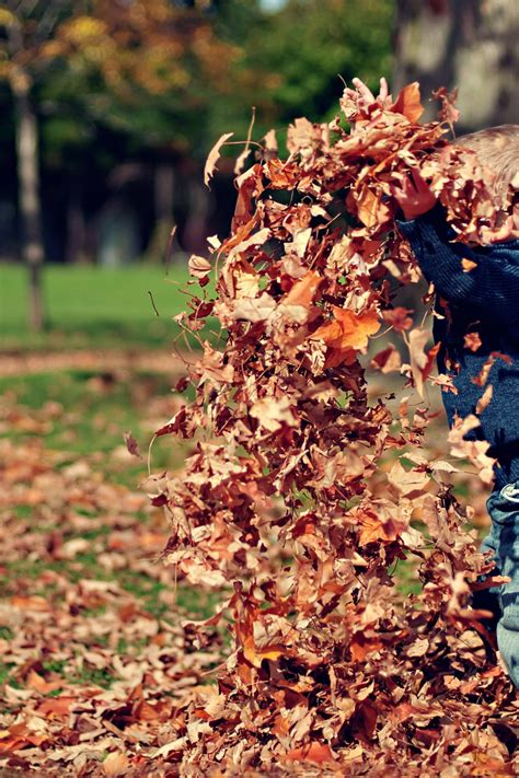 boy playing  fall leaves outdoors  stock photo