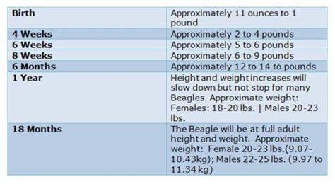 Bichon Frise Growth Chart