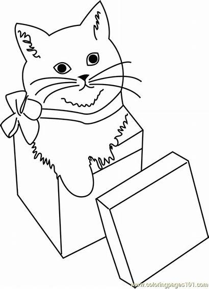 Coloring Cat Pages Christmas Giftbox Gifts Coloringpages101