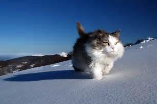 snow cats snow cat i n f o r m a t i o n 2 s h a r e