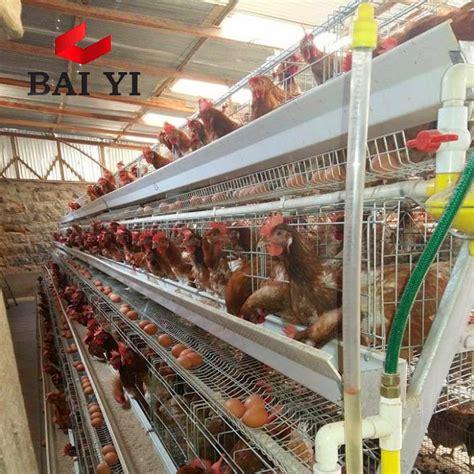 Allevamento Galline Ovaiole In Gabbia - allevamento di galline ovaiole all ingrosso acquista