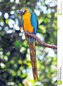 Oiseau Jaune Et Bleu : oiseau bleu et jaune de perroquet image stock image 16158785 ~ Melissatoandfro.com Idées de Décoration