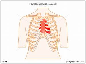 Female Chest Wall  U2013 Anterior Illustrations