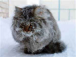 snow cats countero cats and snow