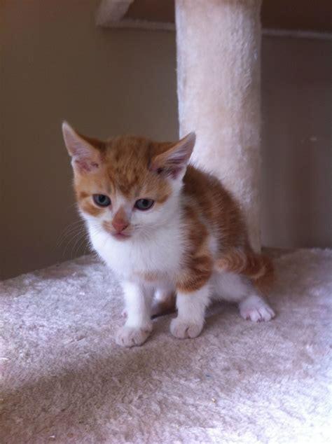 Cute Playful Kitten Ready Now! Last One  Wigan, Greater