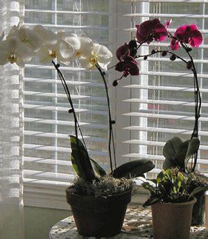 orchids temperature orchid care temperature
