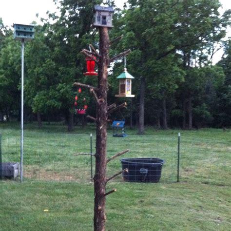 diy bird feeder pole bird feeder pole woodworking projects plans