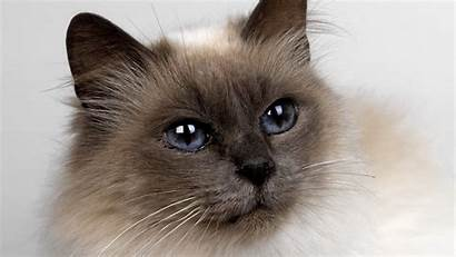 Cat Bright Highlights Eye Wallpaperesque Background