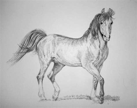 disegni a matita semplici immagini disegni a matita semplici