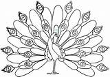 Peacock Coloring Pages Downloadable Printable Coloringhome Via Lesson Draw sketch template
