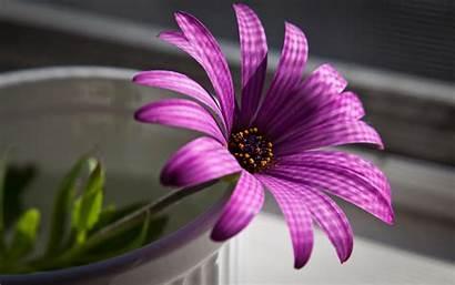 Purple Flower Flowers Nature Wallpapers Desktop Background
