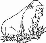 Gorilla Coloring Grass Printable Animals Zoo Gorillas Mountain Animal Apes Wildlife Clipartbest Supercoloring Mammals Clipart Ape Library Myst Super Thevillageanthology sketch template