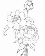 Coloring Pages Peony Peonies Hydrangea Drawing Outline Simple Flower Flowers Line Printable Drawings Getdrawings Justpaintitblog Clusters Patterns sketch template