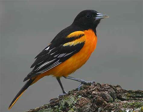 share our garden lure birds to your garden