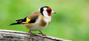 Vogel Mit Roter Brust : v gel beobachten und v gel bestimmen am futterplatz teil 2 vogel und naturschutzprodukte ~ Eleganceandgraceweddings.com Haus und Dekorationen