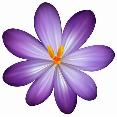 Purple Flower Clipart Flowers Clip Crocus Floral