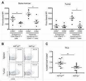 Tissular Hypoxia Determines Cd69 Expression In Vivo   A
