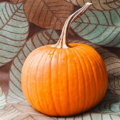 what to make with pumpkin how to make pumpkin puree