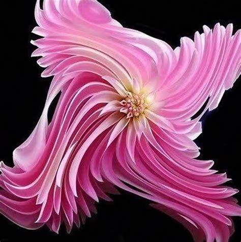 Unusual Flowers  The Best Of The Best  Flowers, Unusual