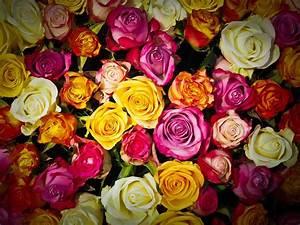 Gelbe Rose Bedeutung : alles rund um rosen die blumenstars im september blog floraqueen deutschland ~ Whattoseeinmadrid.com Haus und Dekorationen