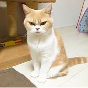 Angry Cat  Grumpy Cat ...