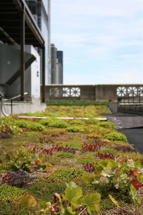 gardens cultural center chicago cultural center green roof blossoming rooftops