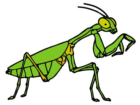Praying Mantis Clipart Black And White - Cliparts.co