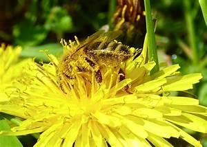 Was Vertreibt Bienen : fotoalbum teil 1 welt der bienen ~ Eleganceandgraceweddings.com Haus und Dekorationen