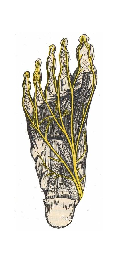 Nerves Foot Pain Feet Neuroma Morton Toes