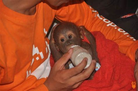 images  baby orangutans   happy