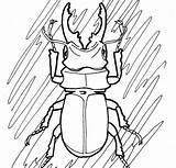 Pages Insect Realistic Coloring Beetle Getdrawings sketch template