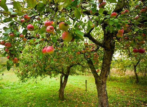 fruit trees grow 5 000 worth of fruit in a small area fast growing trees com blog